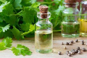 Эфирное масло кориандра: свойства и применение