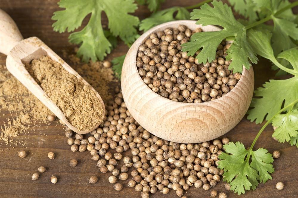 Семена кориандра полезные свойства и противопоказания