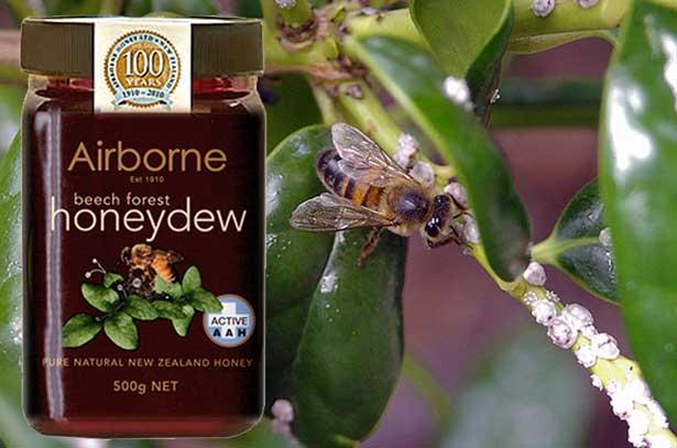 Падевый мед - лечебные свойства