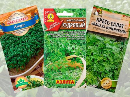 Кресс-салат: виды для посева