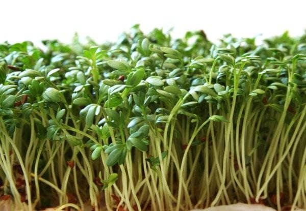 Рецепты блюд с кресс-салатом