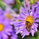 Мультицветковый мед: польза для здоровья