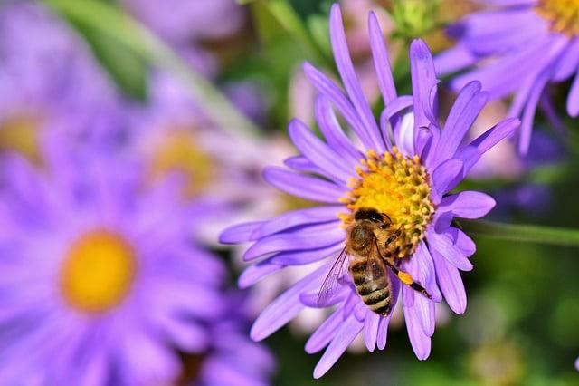Мультицветочный мед: польза для здоровья